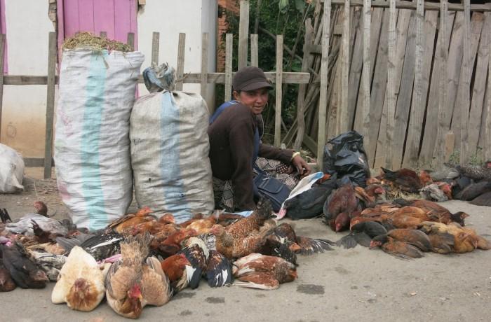 Vendeuse de poules